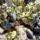 Салат с шампиньонами и сыром с голубой плесенью